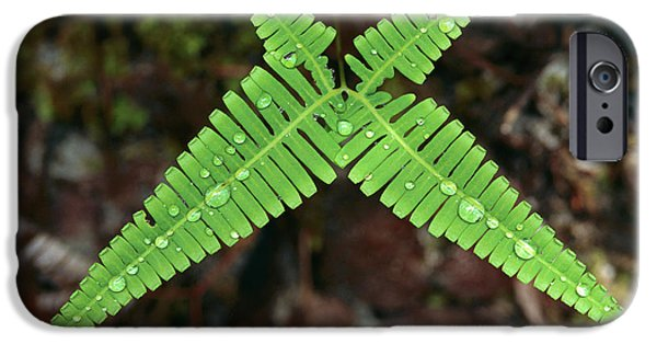 Symetry iPhone Cases - Fern With Water Drops iPhone Case by Thomas Marent