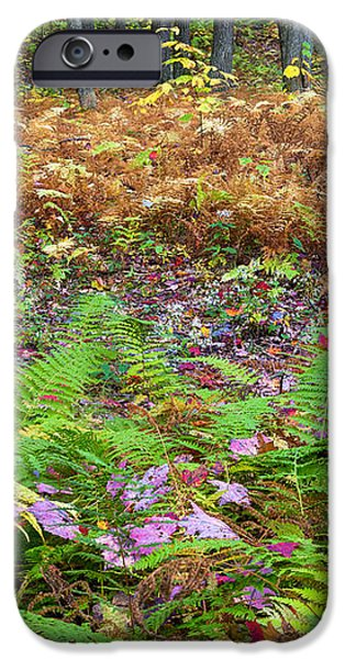 Ferns of Fall iPhone Case by Bill  Wakeley