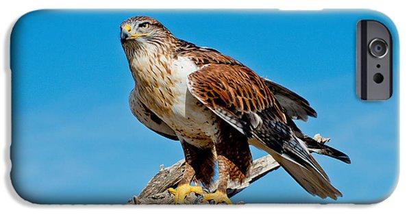 Us Wildllife iPhone Cases - Ferruginous Hawk About To Take iPhone Case by Anthony Mercieca