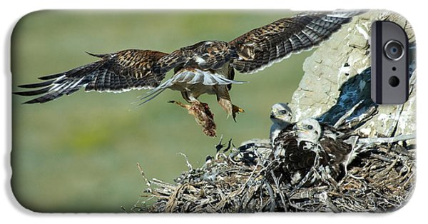 Feeds Chicks iPhone Cases - Ferruginous Hawk Bringing Food To Young iPhone Case by Anthony Mercieca
