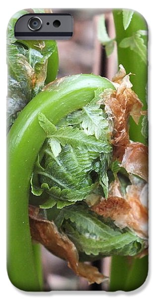 Fiddleheads In Spring iPhone Case by Gene Cyr
