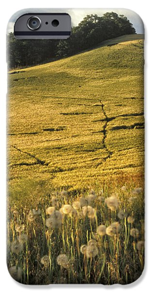 Contour Farming iPhone Cases - Field and Weeds iPhone Case by Latah Trail Foundation