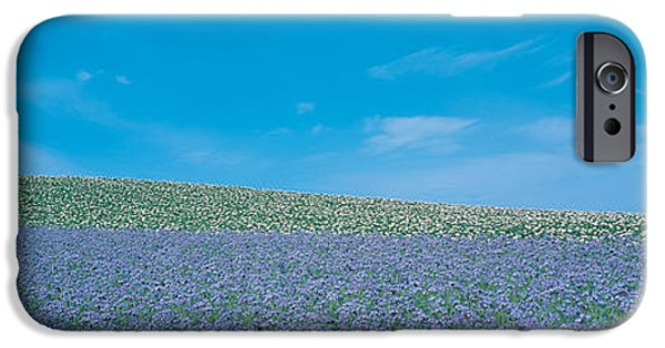 Crops iPhone Cases - Field Biei-cho Hokkaido Japan iPhone Case by Panoramic Images