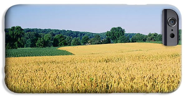 Crops iPhone Cases - Field Crop, Maryland, Usa iPhone Case by Panoramic Images
