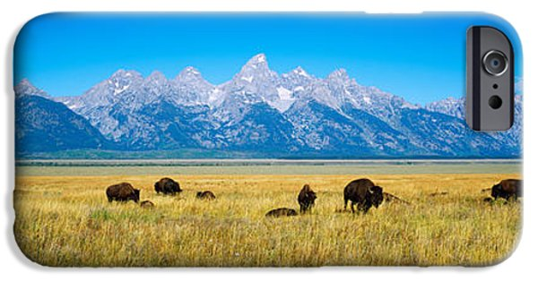 Animals Photographs iPhone Cases - Field Of Bison With Mountains iPhone Case by Panoramic Images