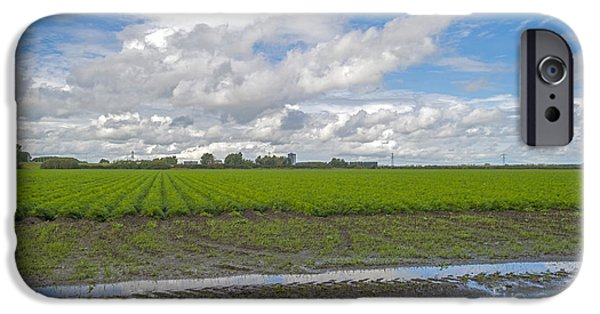 Agriculture iPhone Cases - Field of carrots after rain in summer iPhone Case by Jan Marijs