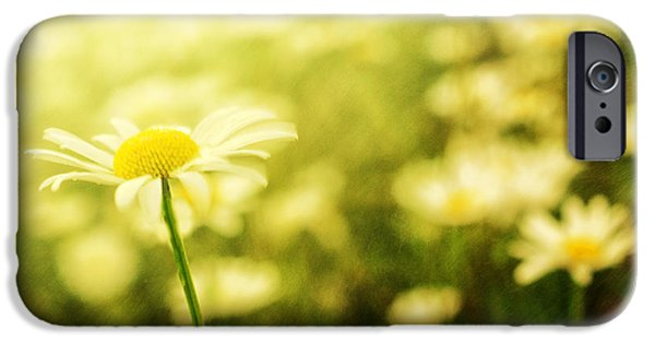 Rainy Day iPhone Cases - Field of Daisies in Summer Rain iPhone Case by Sabine Jacobs