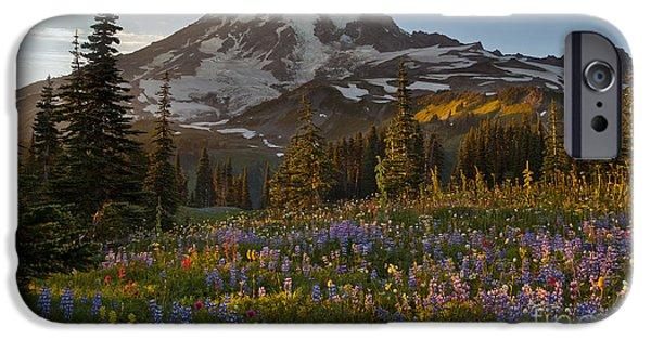Mount Rainier iPhone Cases - Field of Dreams iPhone Case by Mike Reid