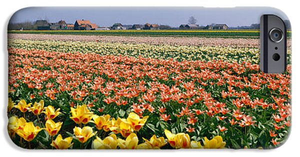 Crops iPhone Cases - Field Of Flowers, Egmond, Netherlands iPhone Case by Panoramic Images