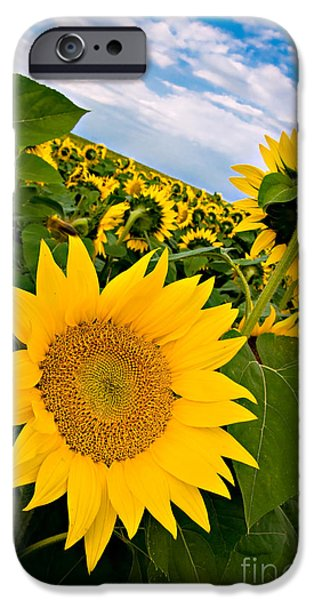 Concept iPhone Cases - Field of Sunflowers iPhone Case by Darko Zagar