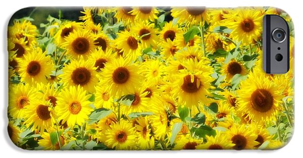 Meadow Photographs iPhone Cases - Field of Sunshine iPhone Case by Belinda Olivastri