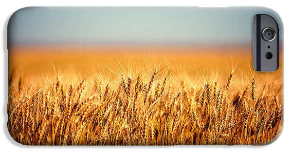 Farm iPhone Cases - Field of Wheat iPhone Case by Todd Klassy