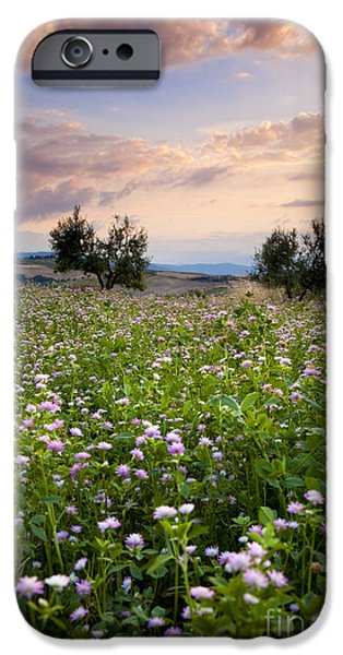 Tuscan Sunset iPhone Cases - Field of wildflowers iPhone Case by Brian Jannsen