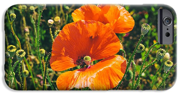 A Sunny Morning iPhone Cases - Field Poppies iPhone Case by Nomad Art And  Design