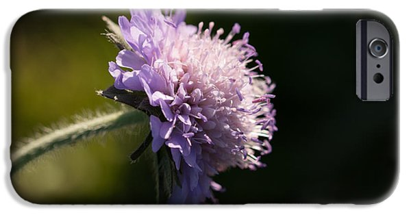 Flora iPhone Cases - Field Scabious iPhone Case by Robert Carr