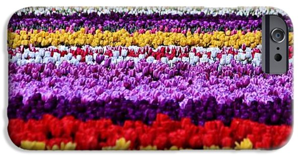 Flora iPhone Cases - Fields of Flowers Panorama iPhone Case by Benjamin Yeager