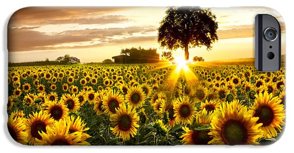 Sunflowers iPhone Cases - Fields of Gold iPhone Case by Debra and Dave Vanderlaan