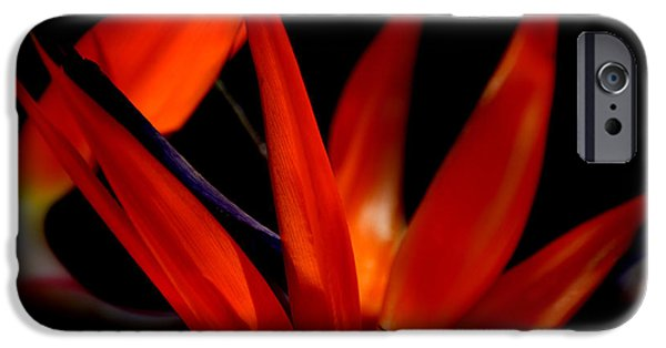 Yellow Bird Of Paradise iPhone Cases - Fiery Red Bird of Paradise iPhone Case by Susanne Van Hulst