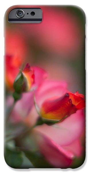 Poetic Photographs iPhone Cases - Fiery Roses iPhone Case by Mike Reid