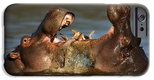 Hippopotamus iPhone Cases - Fighting Hippos iPhone Case by Johan Swanepoel