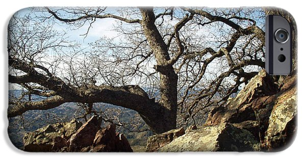 Nature Scene iPhone Cases - Figueroa  Mountain Trees  iPhone Case by Barbara Snyder
