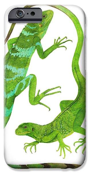 Iguana iPhone Cases - Fijian Iguanas iPhone Case by Cindy Hitchcock