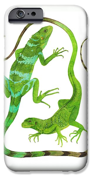 Iguana iPhone Cases - Fijian Iguanas iPhone Case by Cindy Hitchcock