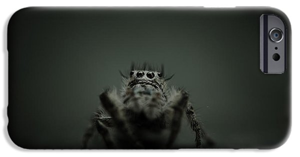 Jumping Spiders iPhone Cases - Filbert the jumping spider iPhone Case by Shane Holsclaw