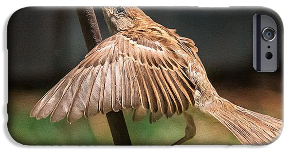Finch iPhone Cases - Finch in Morning Light iPhone Case by Rick Barnard