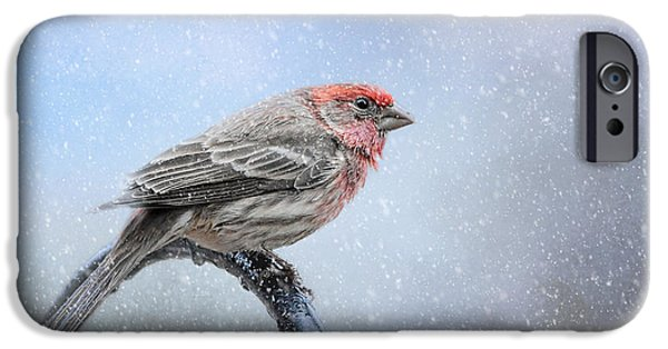 Finch iPhone Cases - Finch In The Snow iPhone Case by Jai Johnson