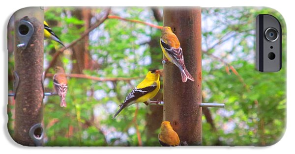 Multimedia iPhone Cases - Finches Enjoying Their Snack iPhone Case by Tina M Wenger
