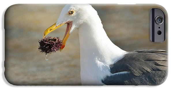 Seagull iPhone Cases - Finders Keepers 2 iPhone Case by Fraida Gutovich