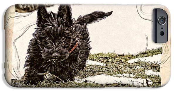 Scottish Terrier Puppy iPhone Cases - Finders Keepers iPhone Case by Image Takers Photography LLC - Carol Haddon