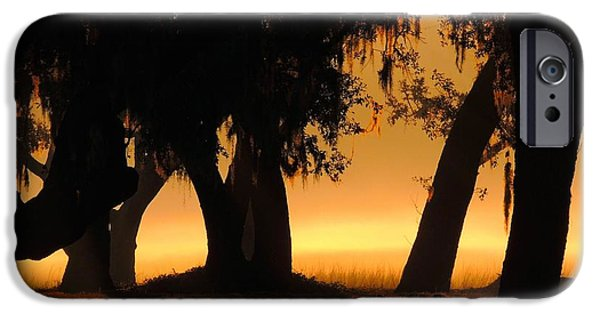 Oak Creek iPhone Cases - Finding Gold iPhone Case by Laura Ragland