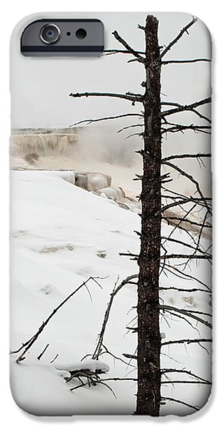 Mammoth Terrace iPhone Cases - Fine Place for a Dead Tree iPhone Case by Bruce Gourley