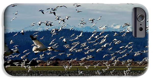 Animals Photographs iPhone Cases - Fir Island Snow Geese iPhone Case by Rick Lawler