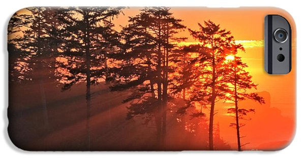 Ocean Sunset iPhone Cases - Fire In The Trees iPhone Case by Adam Jewell