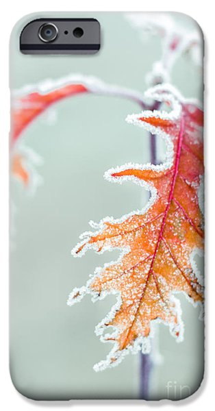 Leaves iPhone Cases - First Frost iPhone Case by Lucid Mood