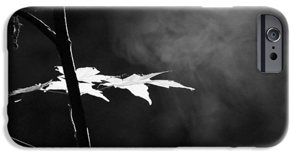 Fog Mist iPhone Cases - First Light In The Forest iPhone Case by Dan Sproul