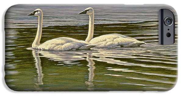 Swans... iPhone Cases - First Open Water - Trumpeters iPhone Case by Paul Krapf