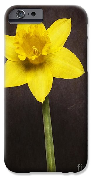 Bulb iPhone Cases - First Spring Daffodil iPhone Case by Edward Fielding