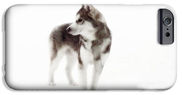 Husky iPhone Cases - First Winter iPhone Case by Iconic Images Art Gallery David Pucciarelli