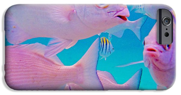 Manatee iPhone Cases - Fish Frenzy iPhone Case by Carey Chen