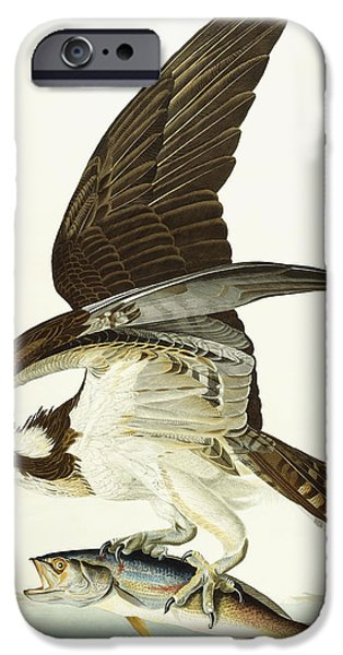 Color Drawings iPhone Cases - Fish Hawk iPhone Case by John James Audubon
