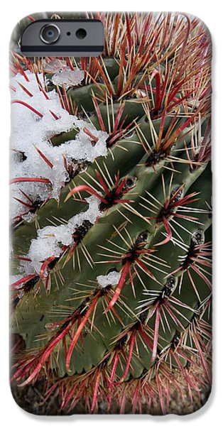Recently Sold -  - Rain Barrel iPhone Cases - Fish Hook Barrel Cactus with Snow iPhone Case by Susan  Degginger