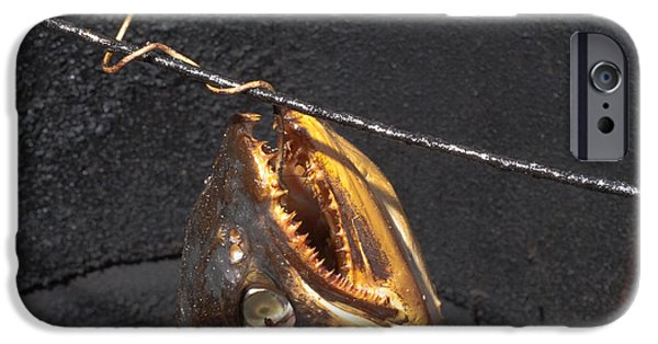 Golden Trout iPhone Cases - Fish in Smoker iPhone Case by Stephan Pietzko