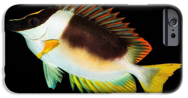 Fish Pyrography iPhone Cases - Fish in the Aquarium iPhone Case by Yasar Ugurlu