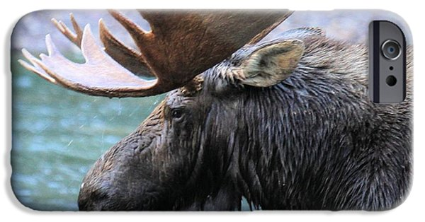 Moose In Water iPhone Cases - Fishercap Moose iPhone Case by Adam Jewell