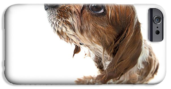 Purebred iPhone Cases - Fisheye wet Archie iPhone Case by Jane Rix