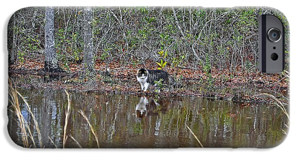 Cat Reflection iPhone Cases - Fishing Feline iPhone Case by Al Powell Photography USA